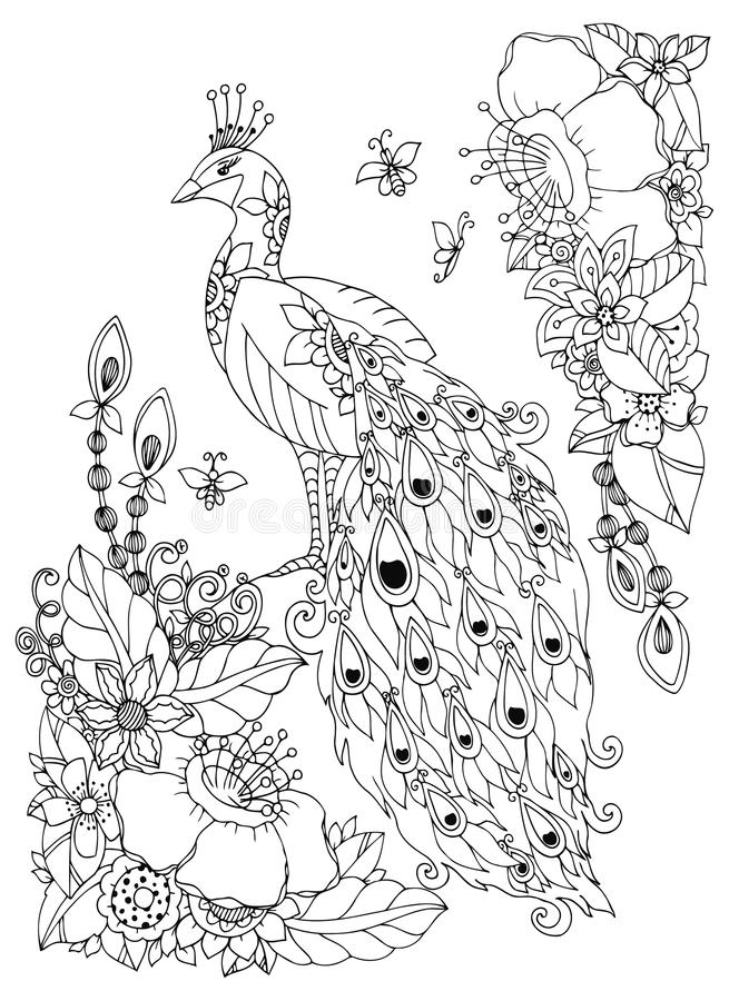 Vector illustration Zen Tangle, peacock and flowers. Doodle drawing. Coloring book anti stress for adults. Black white. Vector illustration Zen Tangle, peacock stock illustration