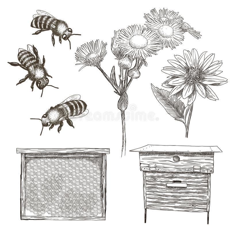 Vector illustrations set with bees, flowers, hive and honeycomb. royalty free illustration