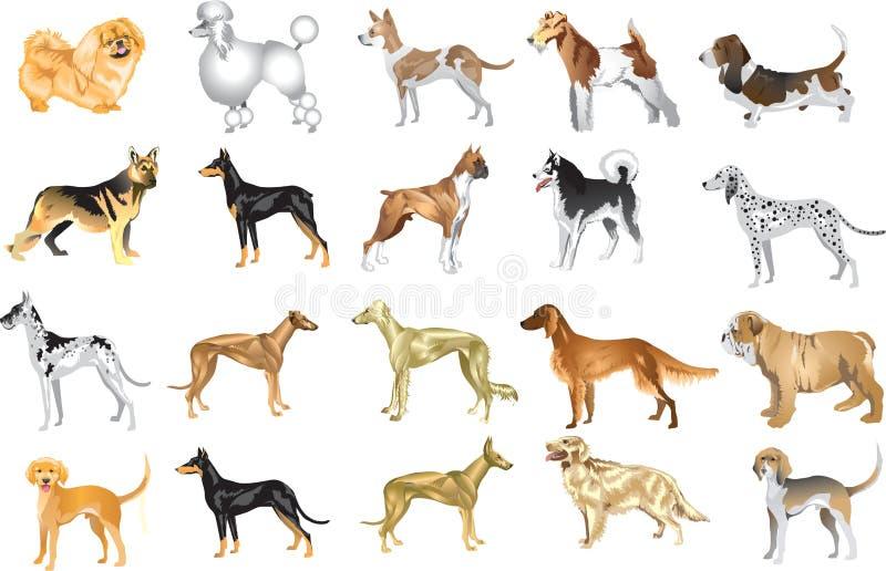 Vector Illustrtion del sistema 3 del perro - diverso animal doméstico canino del perro, guardia And Hunter, animal - ilustración del vector
