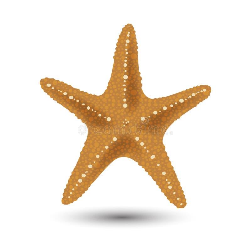 Vector a ilustração, crachás, etiquetas, estrela do mar no estilo realístico isolada no branco Cópia, molde, elemento do projeto ilustração do vetor