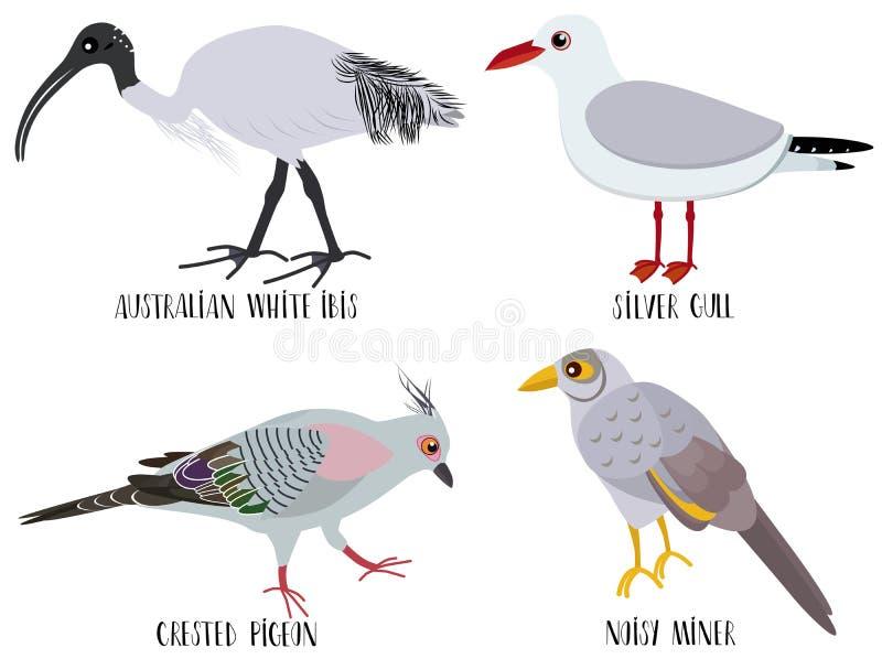Vector a ilustração de desenhos animados bonitos do pássaro - australiano ilustração do vetor
