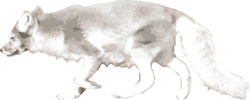 Vector a ilustração de um lobo ilustração stock