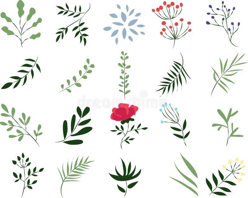 Vector a ilustração de uma planta em um fundo branco ilustração stock