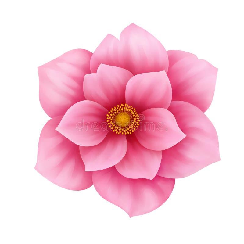 Vector a ilustração decorativa da flor cor-de-rosa da anêmona isolada no branco ilustração stock