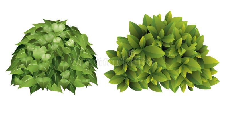 Vector a ilustração do arbusto do jardim com as folhas verdes no estilo dos desenhos animados ilustração stock