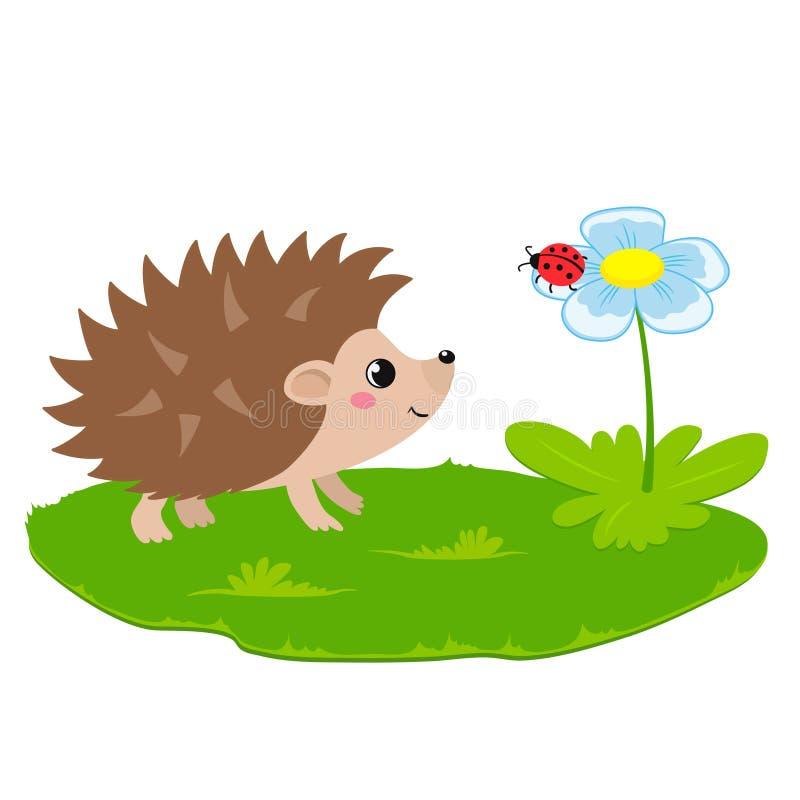 Vector a ilustração do ouriço bonito e da flor com joaninha ilustração do vetor