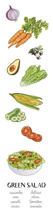 Vector a ilustração tirada mão com os ingredientes da salada verde ilustração do vetor