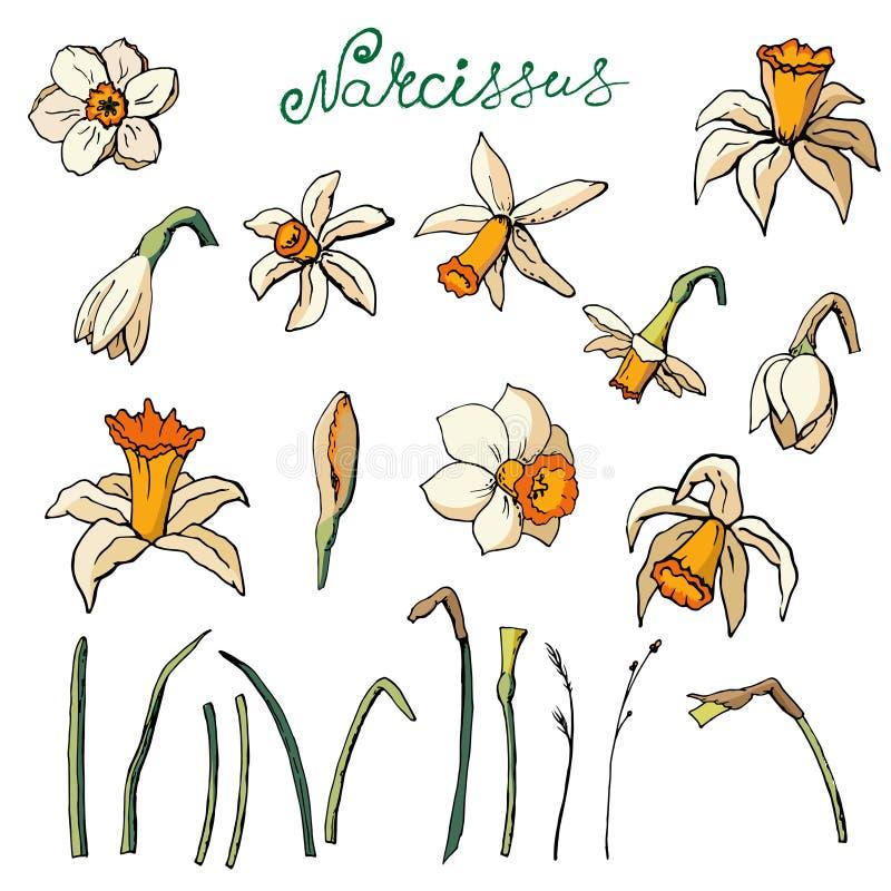 Vector a ilustra??o floral ilustração stock