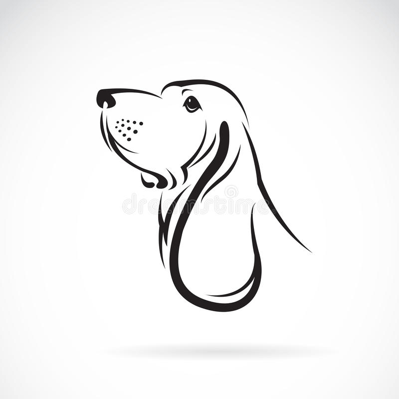 Vector image of a basset hound head royalty free illustration
