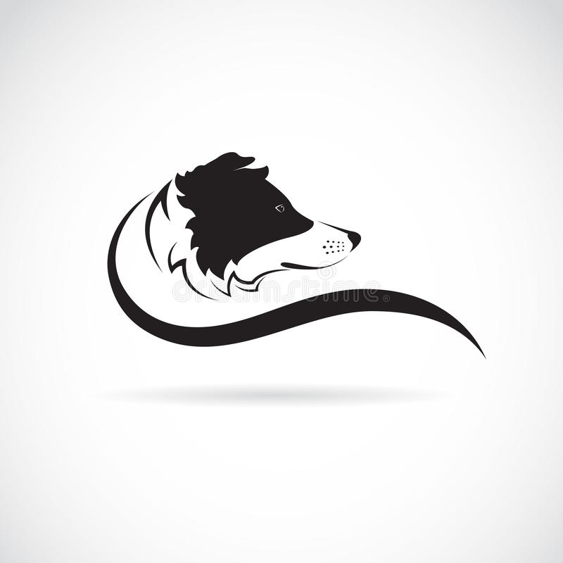 Vector image of an border collie dog. On white background