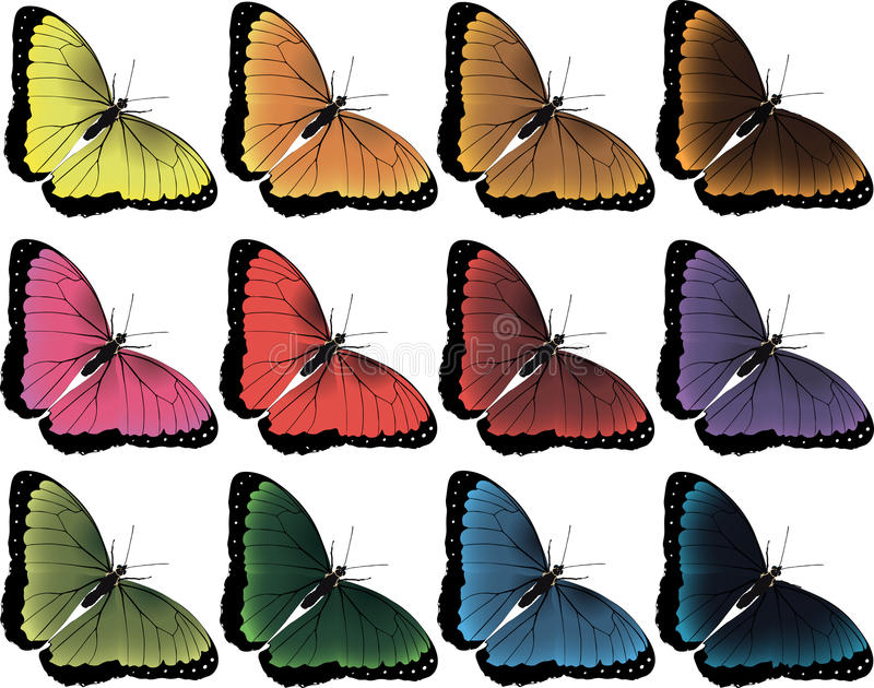 Vector image of 12 butterflies royalty free stock photo