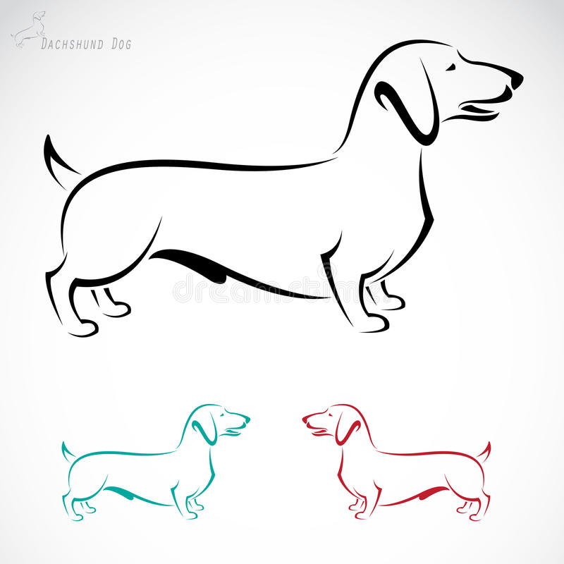 Vector image of an dog (Dachshund). On a white background