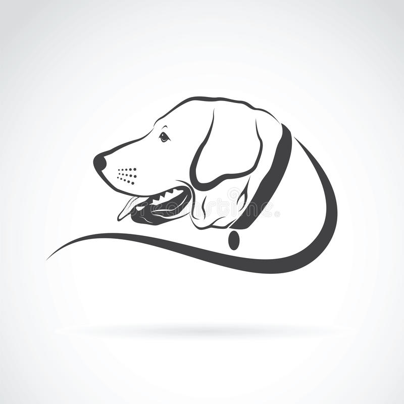 Vector image of an dog labrador head. On white background stock illustration