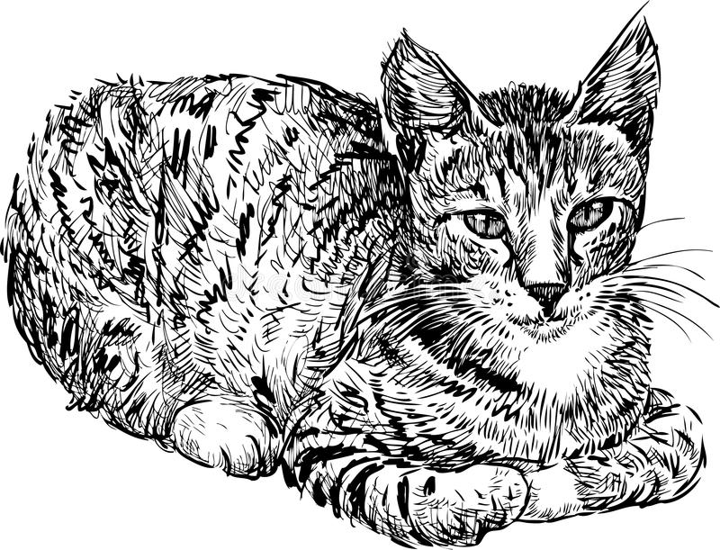 Download Domestic cat stock illustration. Image of ears, cute - 29996330
