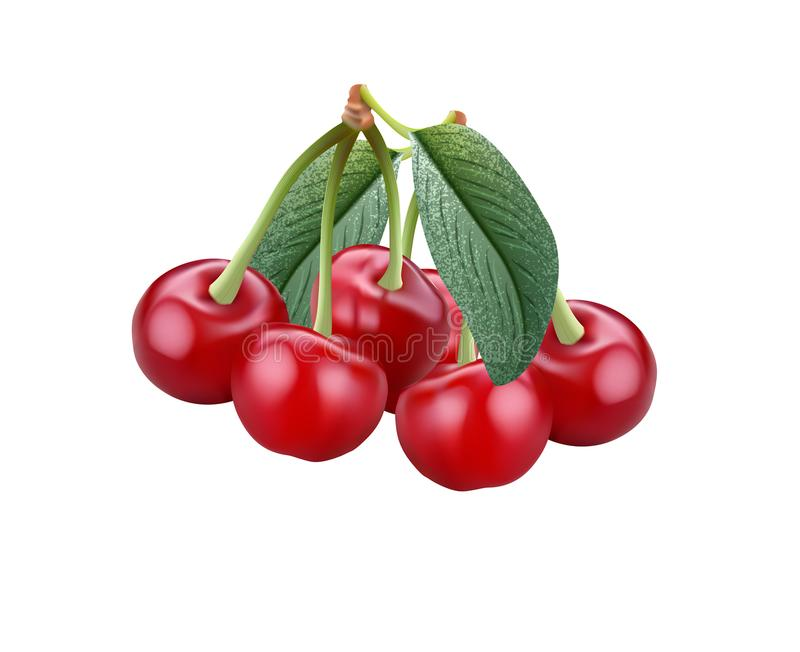 Fresh cherry in vector editable stock images
