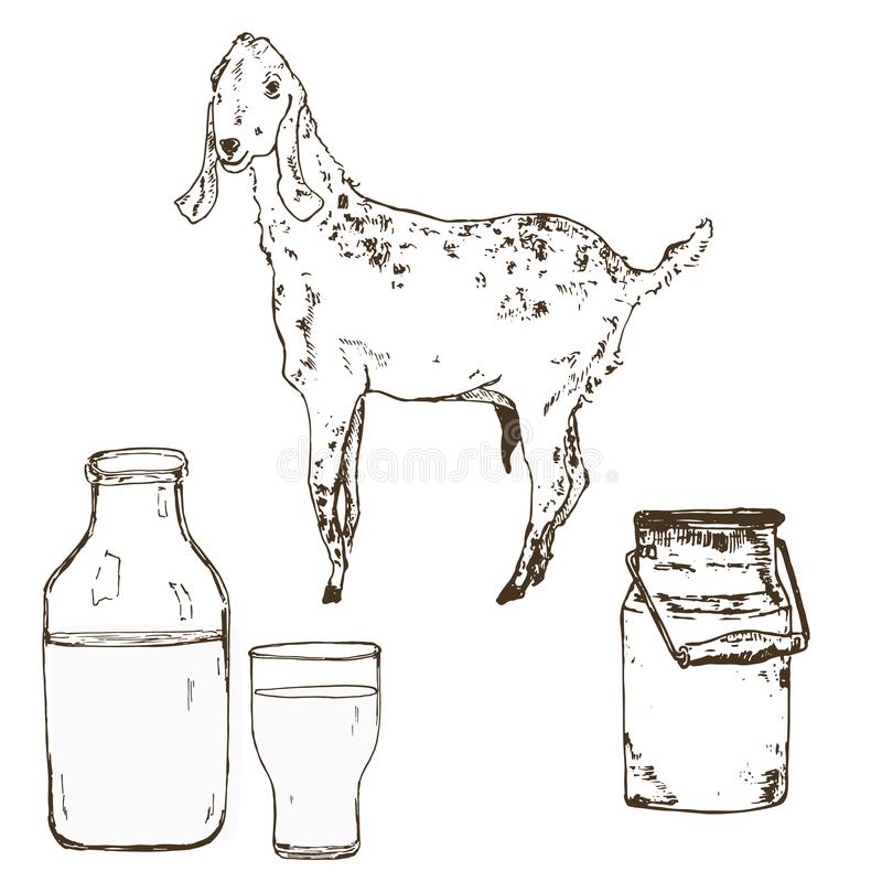 Vector image of goat, goat milk bottle, milky can and vintage banner. A set of agricultural illustrations in the style vector illustration