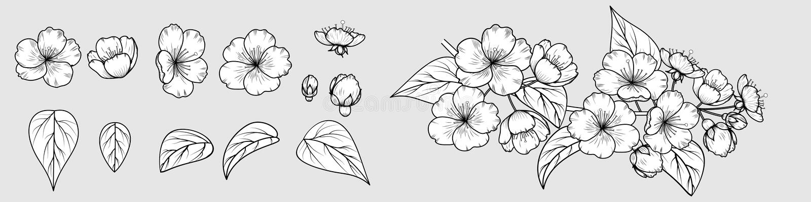 Vector image of a hand-drawn cherry blossom branch. stock photography