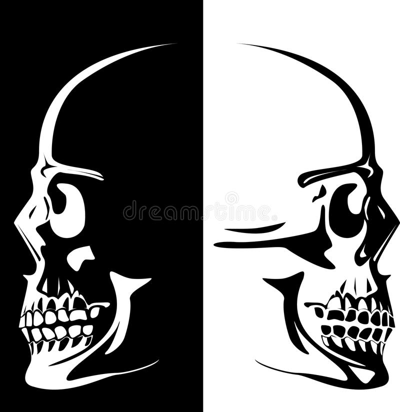 Vector image of a human skull. Series. Vector image of a human skull on a black and white background royalty free illustration