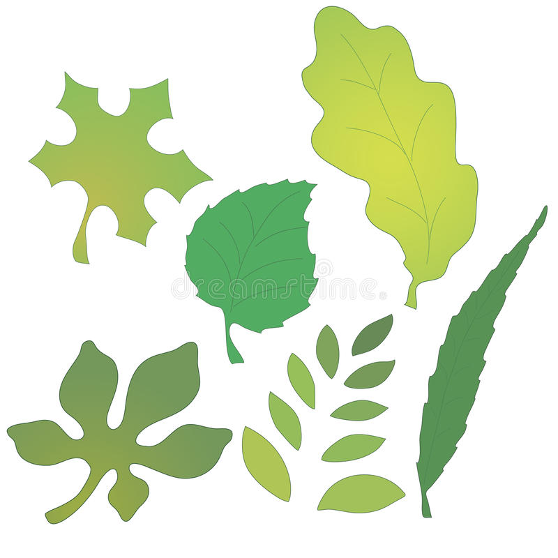 Vector image of leaves vector illustration