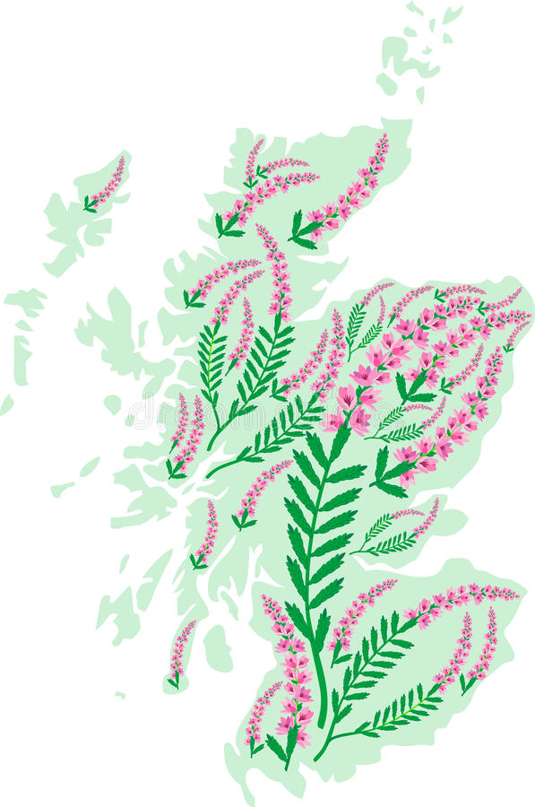 Vector Illustration Of Heather Botanical Horticulture Clipart (#3534554) -  PinClipart