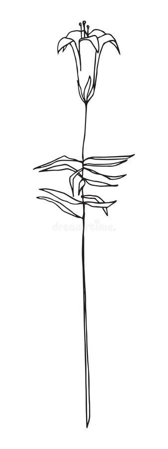 Vector image. Outline harebell flower. Line illustration of bluebell or campanula. Sketch style vector illustration