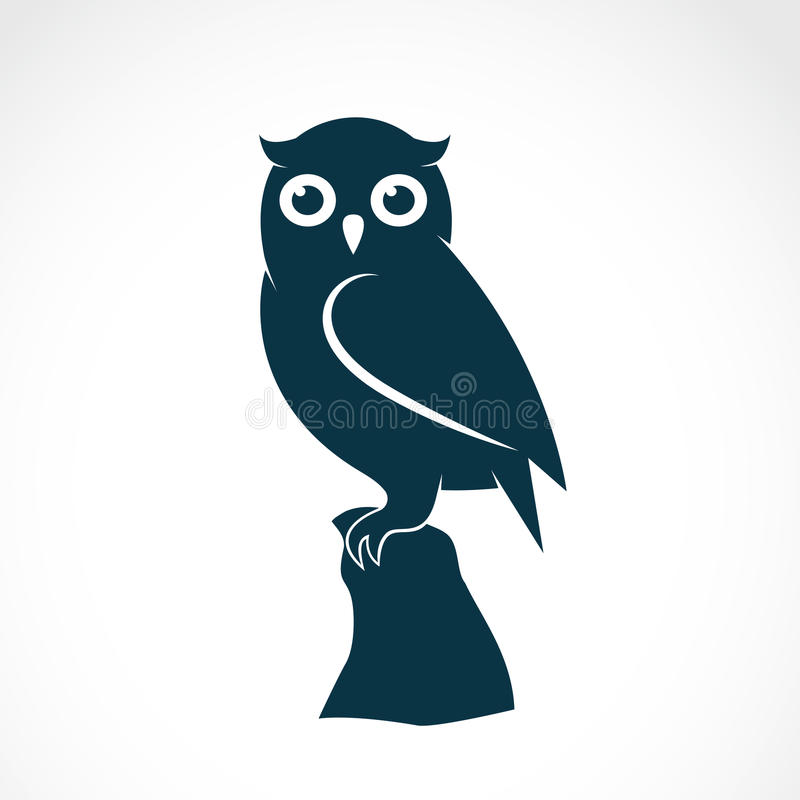 Vector image of an owl. On white background