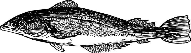 Download Sea Fish Royalty Free Stock Image - Image: 30084626