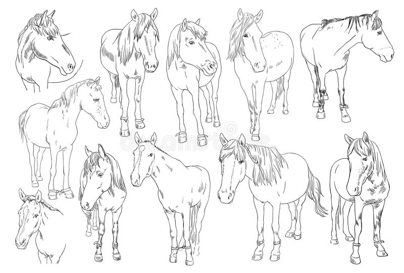 Vector image set of an horse on white background. Outline sketch illustration of beautiful horses portrait one line vector illustration