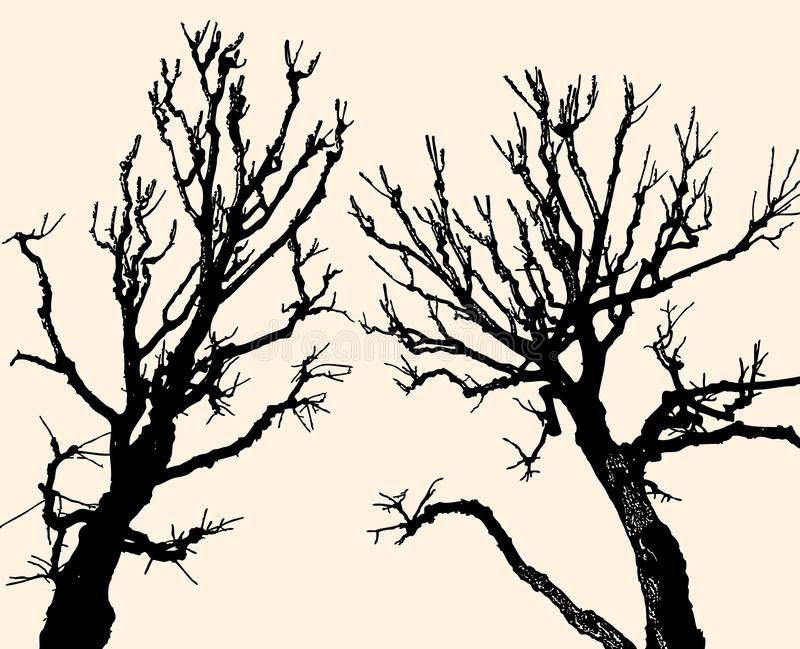 Vector image of silhouettes of two deciduous trees in cold season vector illustration