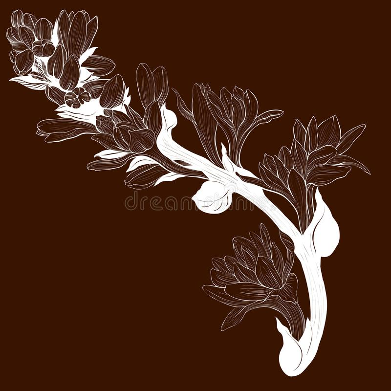 Vector image. Tuberose - branches. Medicinal, perfumery and cosmetic plants. Wallpaper. Use printed materials, signs, posters, pos. Tcards, packaging stock illustration