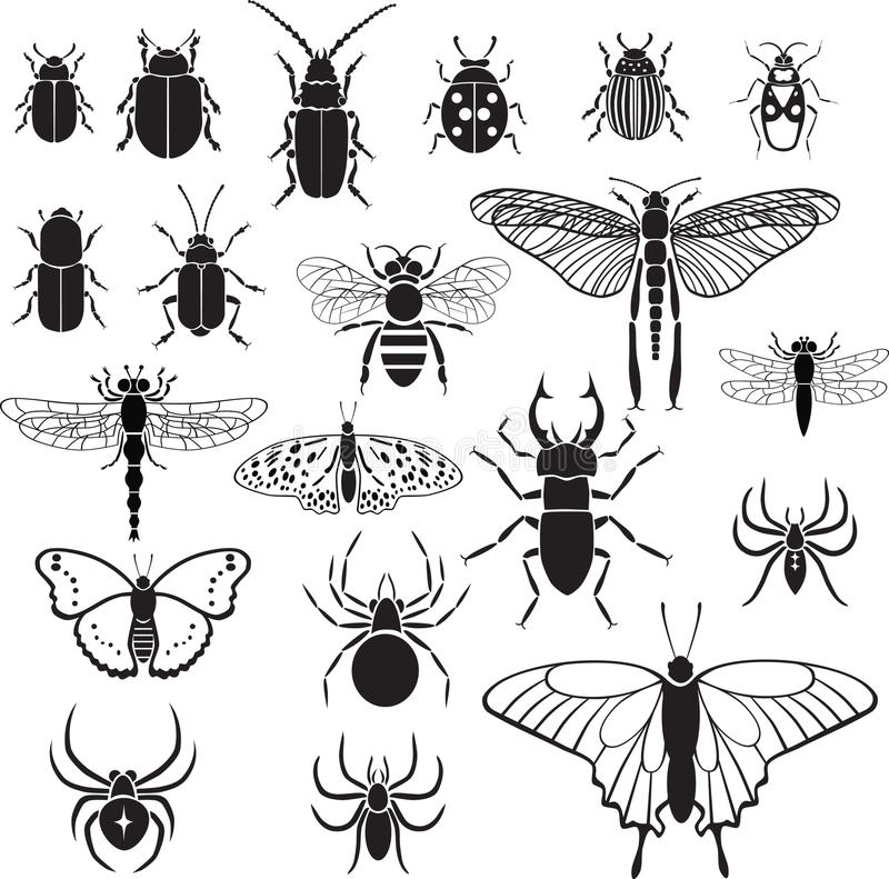 20 vector images of insects stock photo