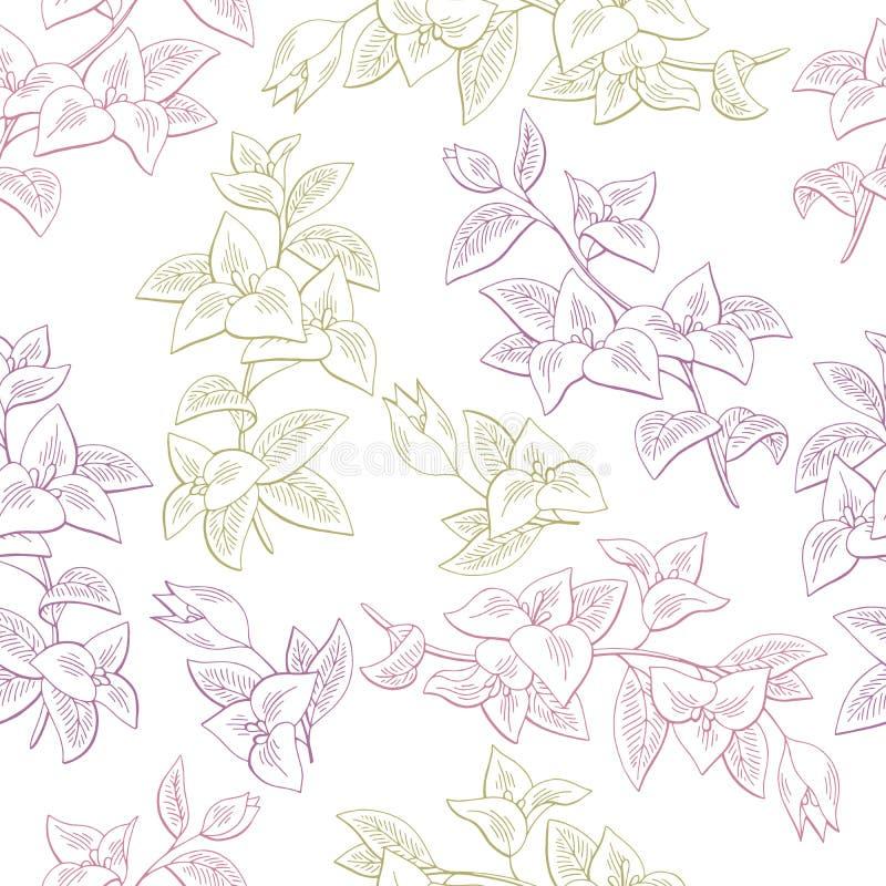 Vector inconsútil del ejemplo del bosquejo del fondo del modelo del color gráfico de la flor de la buganvilla stock de ilustración