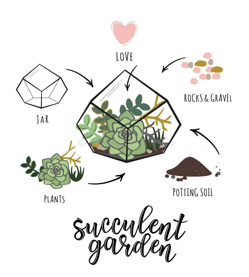 Download `Succulent Garden` Infographic Stock Vector   Illustration Of  Design, Farming: 111646488