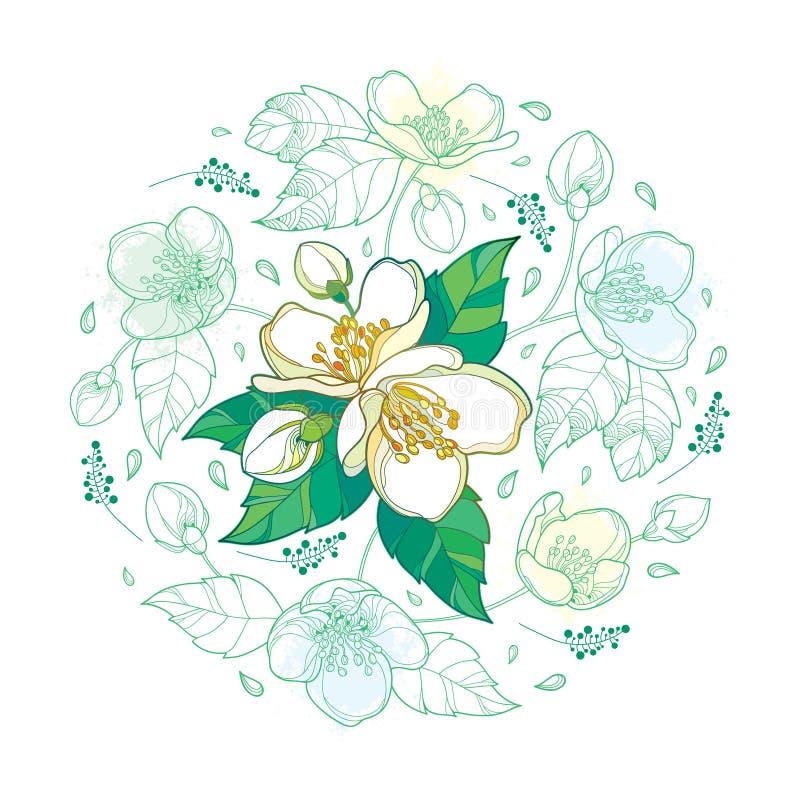 Vector intorno al mazzo con il mazzo del fiore del gelsomino del profilo, il germoglio e le foglie decorate in verde pastello e n illustrazione vettoriale