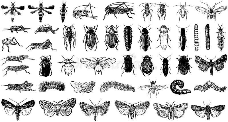 Vector inzameling van gemengde insectenvlinder royalty-vrije illustratie