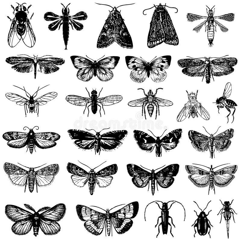 Vector inzameling van vlinder en insecten stock illustratie