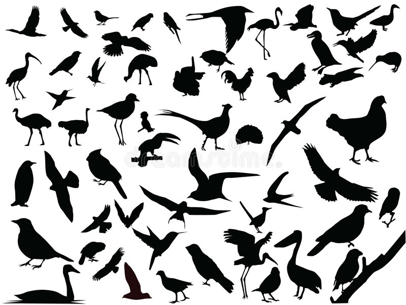 Vector of isolated birds royalty free illustration