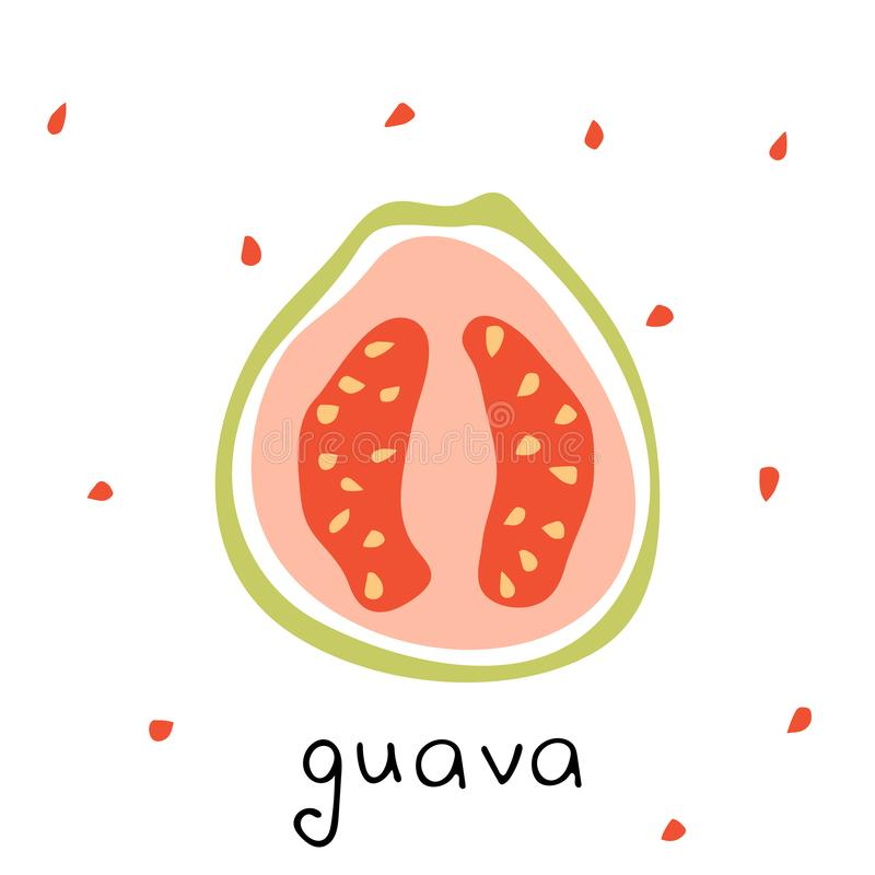 Vector isolated drawing of  guava. Tropical fruit in modern simple style vector illustration