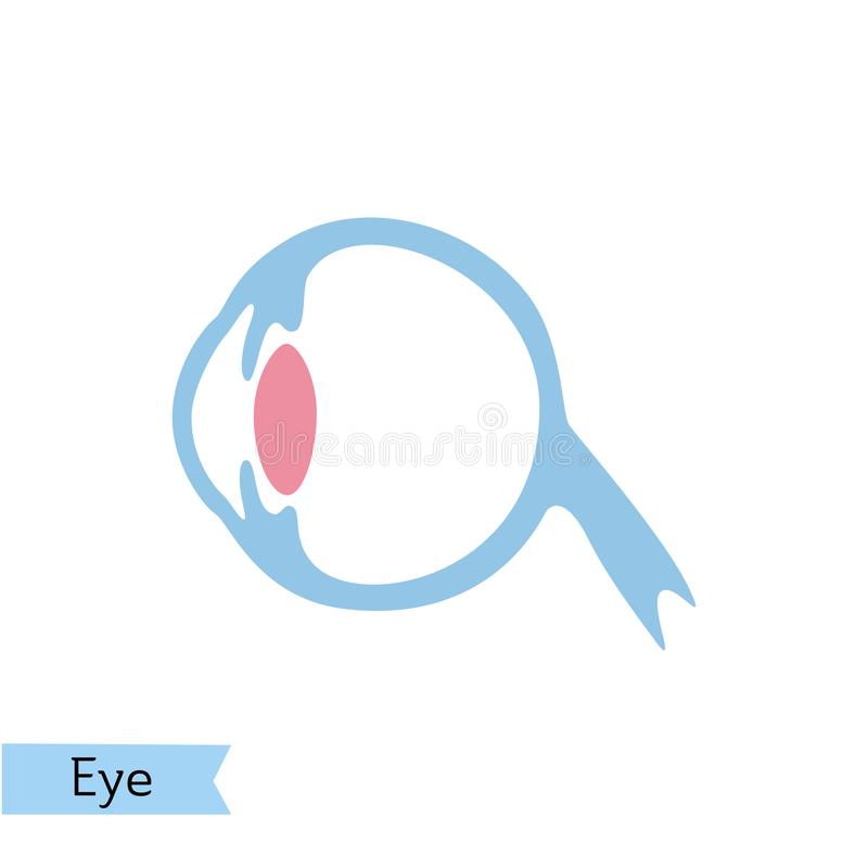 Vector isolated illustration of eye. Anatomy. Human ocular system icon. Healthcare medical center, surgery, hospital, clinic, diagnostic logo. Internal donor royalty free illustration