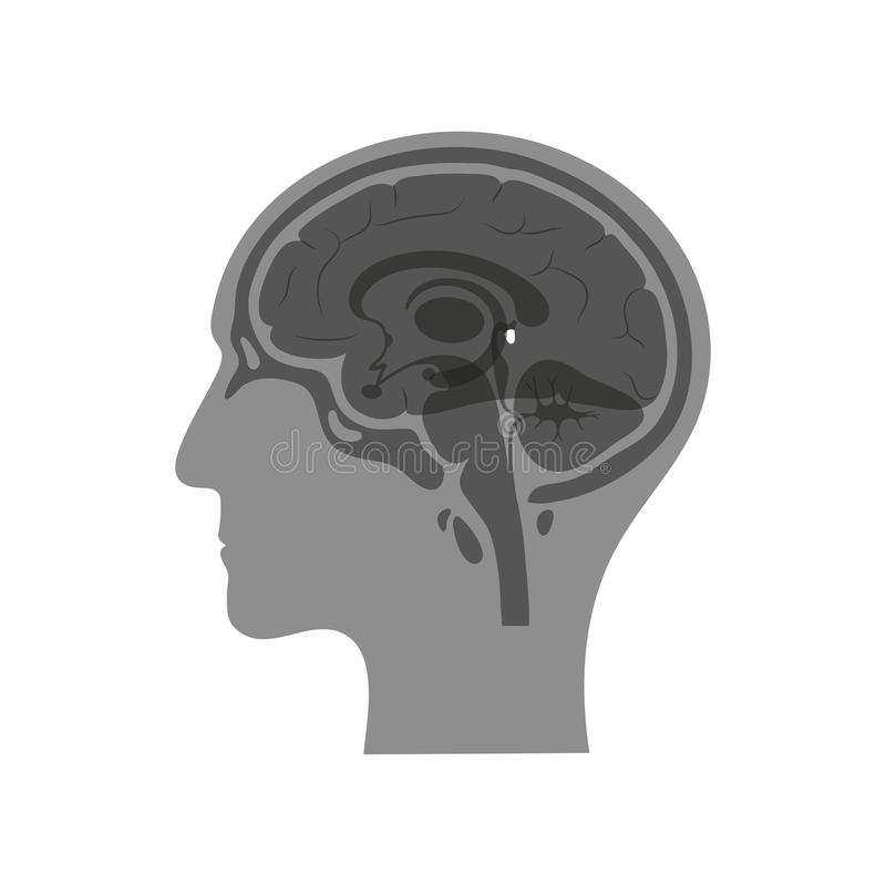 Free Vector Isolated Illustration Of Pineal Gland Stock Images - 157143854