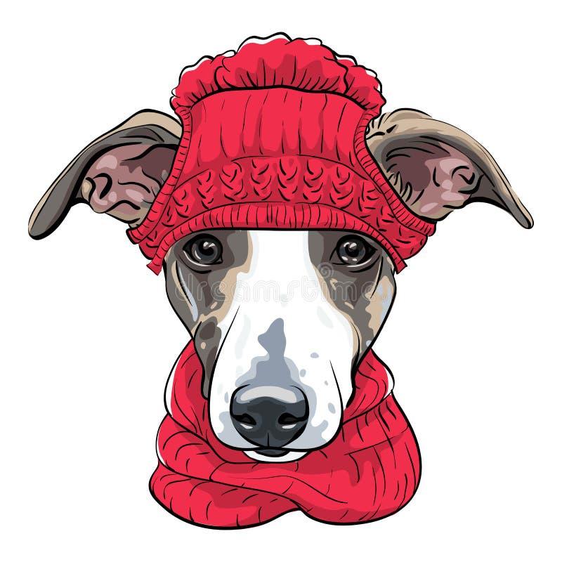 Vector Italian Greyhound Dog Breed Stock Vector - Illustration of ...