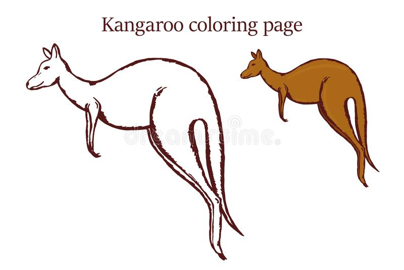 Kangaroo Coloring Page On White Background Stock Vector