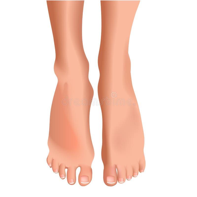 Vector l'illustrazione dei piedi femminili su fondo bianco realistico illustrazione vettoriale