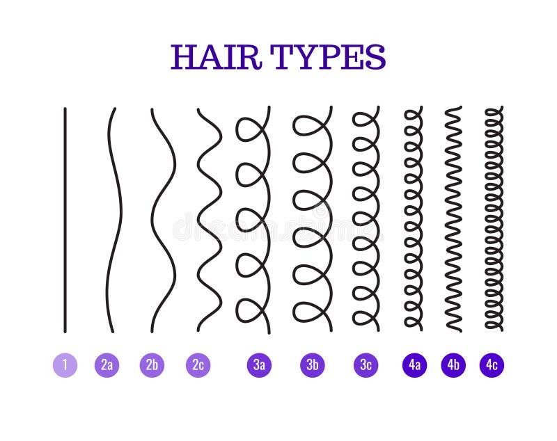 Vector l'illustrazione dei tipi grafico dei capelli che visualizza tutti i tipi ed avuto identificato royalty illustrazione gratis