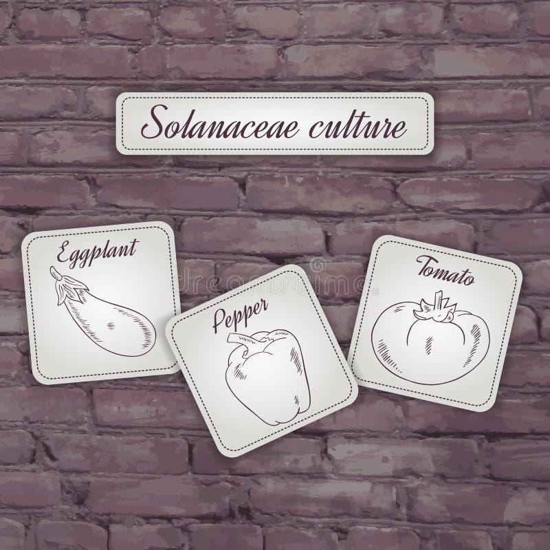 Vector l'illustrazione del flashcard con la cultura delle solanaceae delle verdure: pomodoro, pepe e melanzana su un contesto del illustrazione di stock