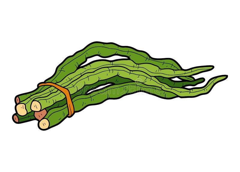 Vector l'illustrazione di colore, le verdure, il fagiolo lungo cinese illustrazione di stock