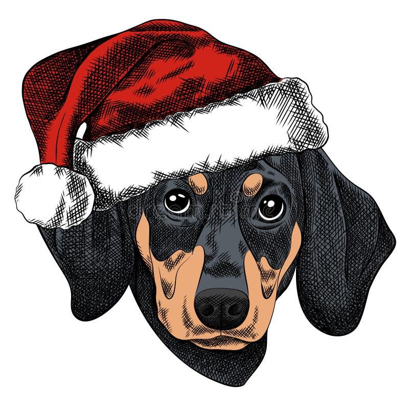 Vector l'illustrazione di un cane del bassotto tedesco per una cartolina di Natale Cappuccio del bassotto tedesco in rosso di San royalty illustrazione gratis