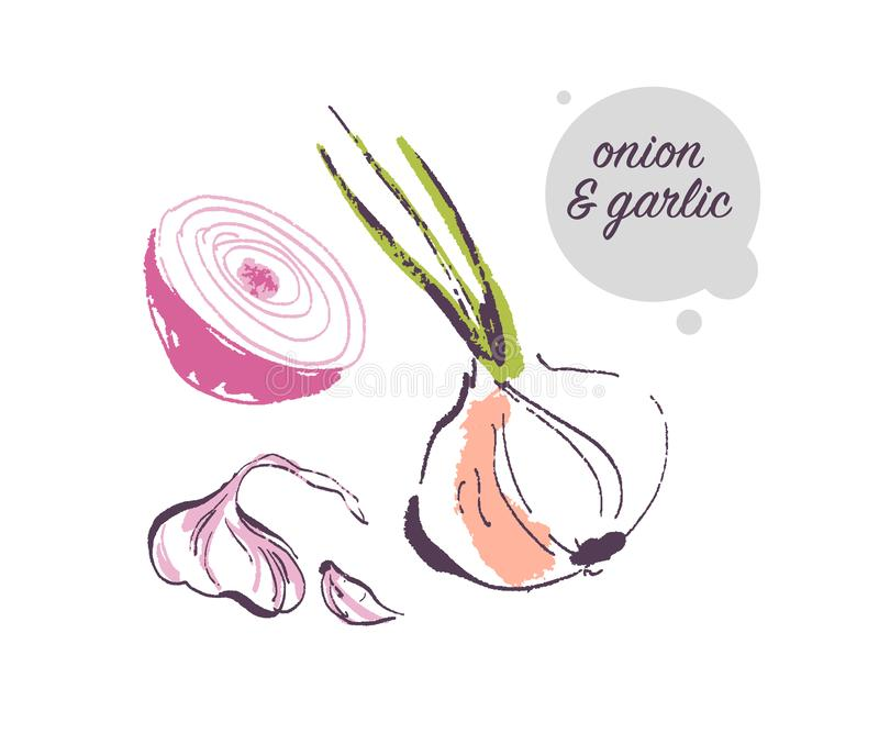 Vector l'illustrazione disegnata a mano della verdura cruda fresca della spezia dell'aglio e della cipolla isolata su fondo bianc illustrazione vettoriale