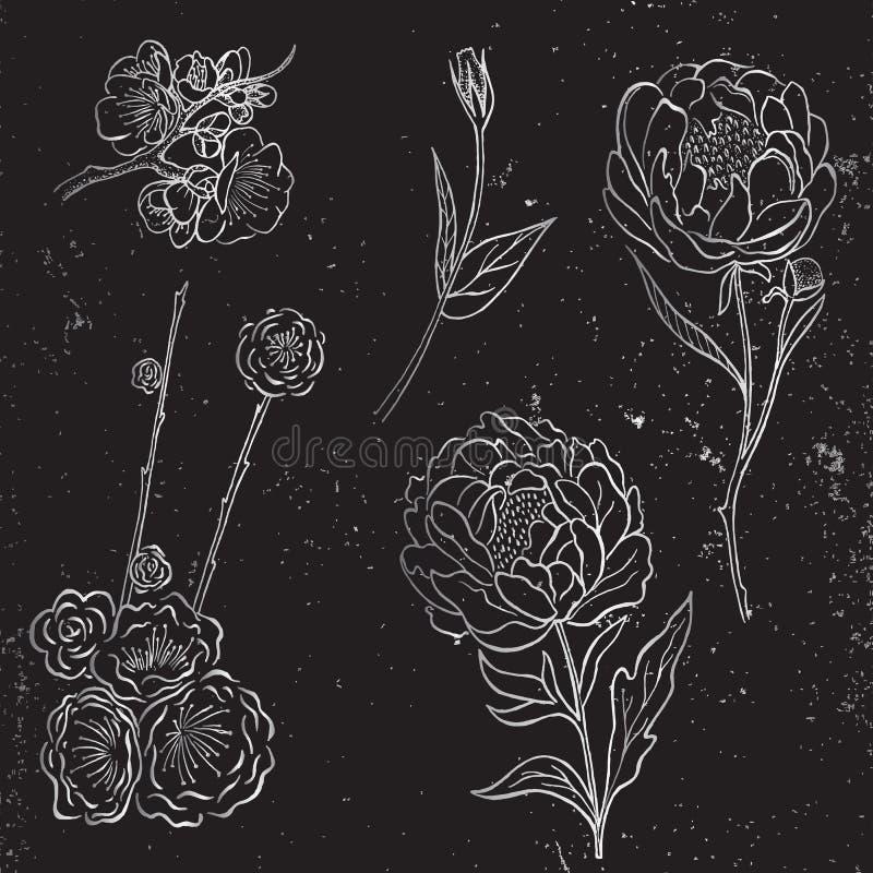 Vector la colección de peonía dibujada la mano de plata y las flores y las hojas color de rosa en fondo negro ilustración del vector