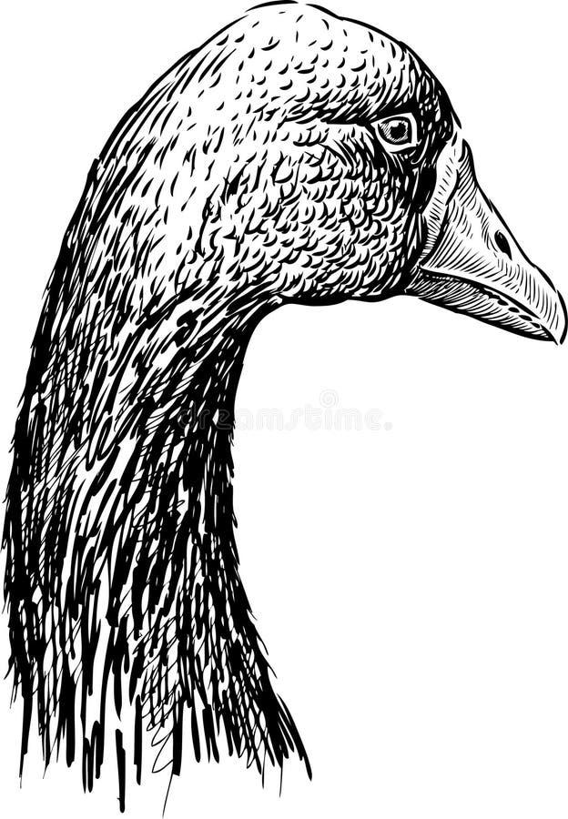 Cabeza del ganso 2 stock de ilustración